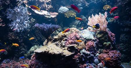 aquarium filterspons