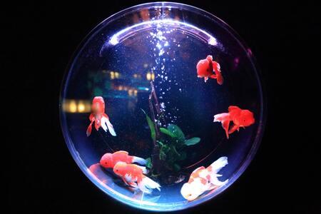 filterspons aquarium